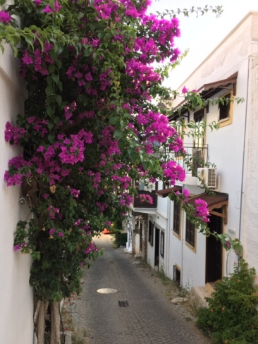Flowers by cobbled street
